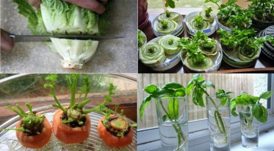 8 légumes que vous ne devriez acheter qu'une seule fois, car vous pouvez les faire repousser indéfiniment!